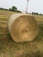 Tame hay for sale