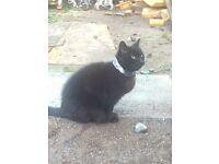 Found female cat in broxburn