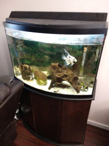 36 Gallon Bow Front Fish Tank with Stand