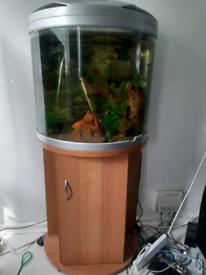 Fish Tank Aqua Mode 600 Aqua One for sale with Stand