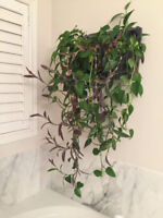 Living Wall Planter and Plants