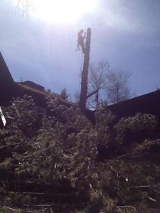 Affordable Tree Trimming and Removal Stratford Kitchener Area image 6
