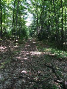Charmante terre à bois facilement accessible à Mandeville!!