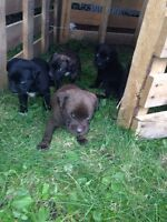 Cute puppys ready to leave to new home