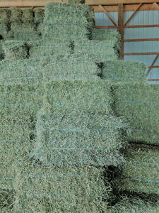 2ND CUT TIMOTHY, ALFALFA & ORCHARD GRASS, ALFALFA HAY FOR SALE