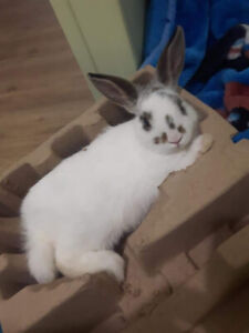 Female Bunny to Good Home
