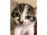 Gorgeous kittens ready for forever homes