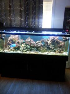 Aquarium 125 gall saltwater