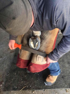Quality Farrier Services