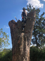 ALL TREE WORK & TREE REMOVAL SERVICES.........REASONABLE PRICES