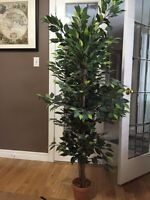 Fake/artificial house plant/ tree - excellent condition