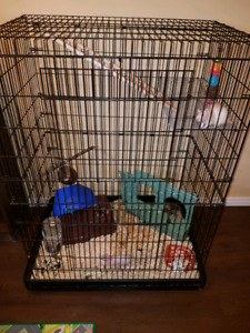 two rats with cage and accessories