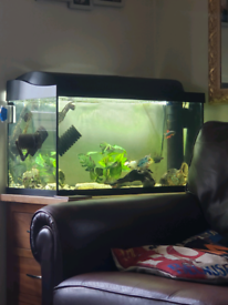 Large fish tank with 3 fish and complete set up