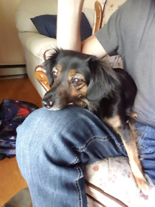 LOST DOG FOUND IN ST. BONIFACE