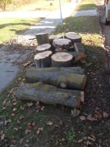 Free wood-sugar maple