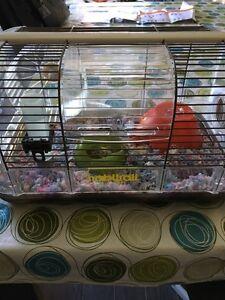 Hamster FREE / GRATUIT