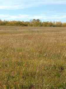Pasture & land for lease