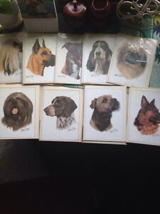 Robert may art greeting cards of dog portraits - all new