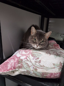 Adult Female: Muffin