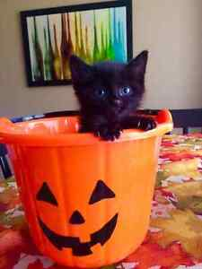 Rescue kittens for adoption in Peace River