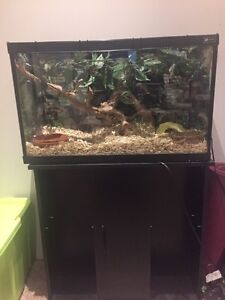 Corn Snake For Sale (Price negotiable)
