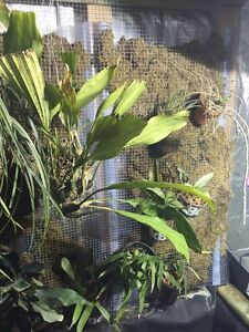ORCHIDS AND OTHER EXOTIC PLANTS