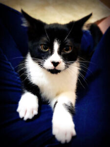 Cat for Rehoming