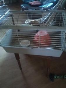 Cage a lapins e cochon d inde