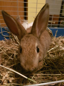 Sweet baby male rabbit