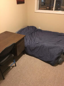 Looking for a summer roommate