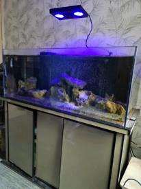Beautiful marine tank full set up