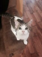 FREE four month old kitten FREE in need of home