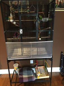 Breeding Pair of Budgies and Extra Large Cage