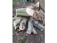 Free to collect logs wood tree trunk