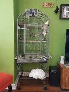 Two cockatiel couple with a HUGE nice cage