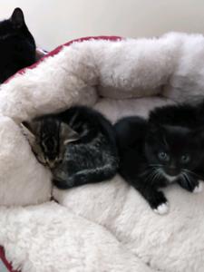 Delivered kittens