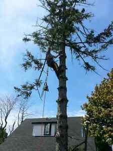 Doulton tree service Kingston Kingston Area image 1