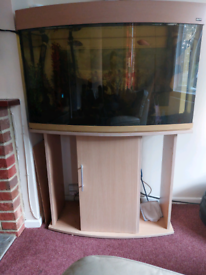 Bargain!!!!! Fish and fish tank for sale