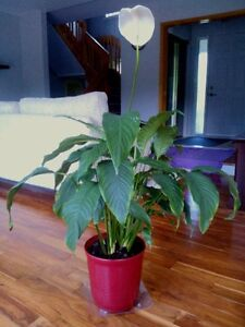 Selling some extra indoor plants, starting from $8