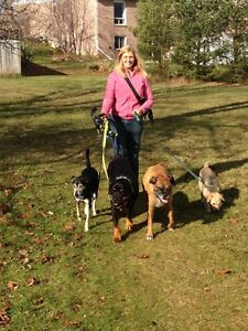 Experienced Dog Walker