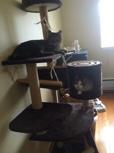cat tree for selling