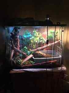 Chinese Water Dragon with 70 Gal. Tank and accessories London Ontario image 1