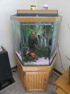 Hexagon tank kijiji free classifieds in ontario find a for Hexagon fish tank with stand