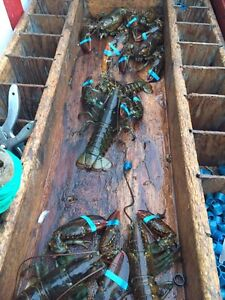 Looking for area 25 lobster license!