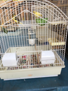 Couple canary with cage