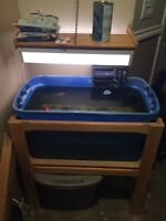 Pond fish and indoor set-up during winter months