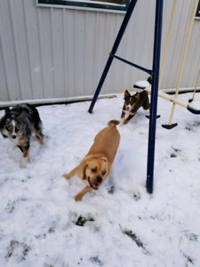 Pet Sitting and Daycare Experienced and Always Home