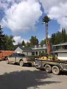 P.C. Tree Service (FULLY INSURED) Kawartha Lakes Peterborough Area image 6