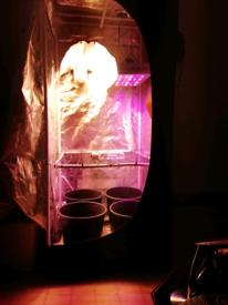 60x60x140cm grow tent kit