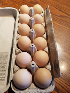 Hatching eggs - Chicken, Duck, goose, Turkey and button quail